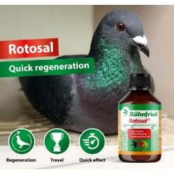 Rohnfried Rotosal 250ml -... 2